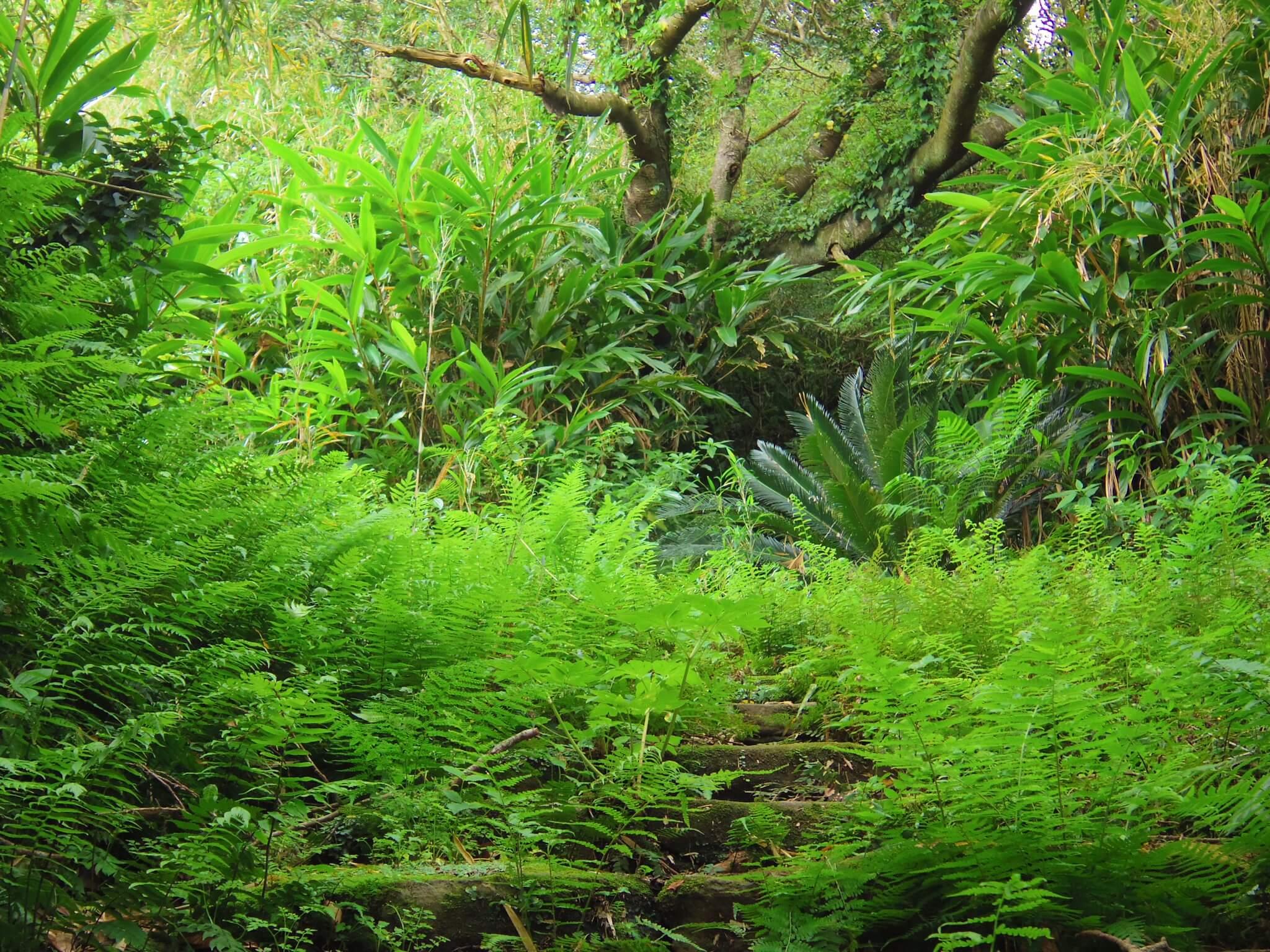 名主屋敷跡の植物3