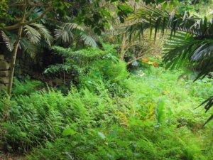 名主屋敷跡の植物