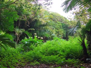 名主屋敷跡の植物2
