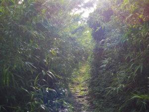 金毘羅神社への道