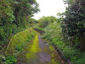 尾山展望公園への道②