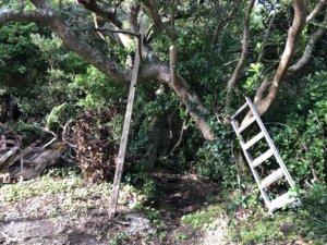 渡海神社への道③