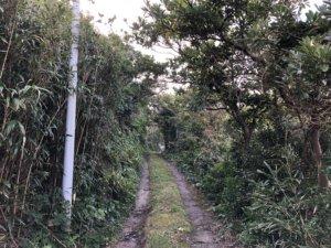 渡海神社への道②