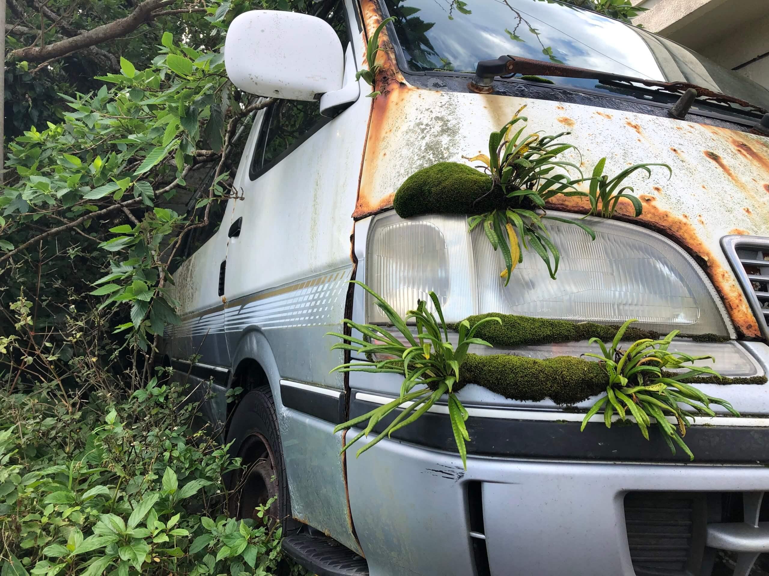 車から植物
