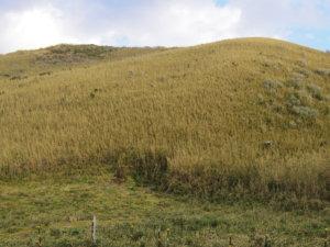 ジョウマン草原