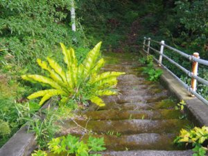 名主屋敷跡の階段