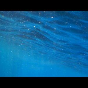 aogashima blue ヘアゴム 写真