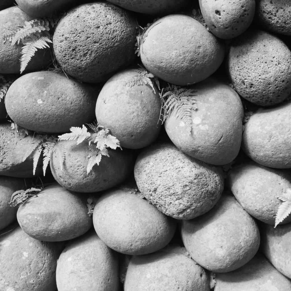 玉石垣白黒