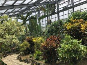 八丈植物公園温室内①