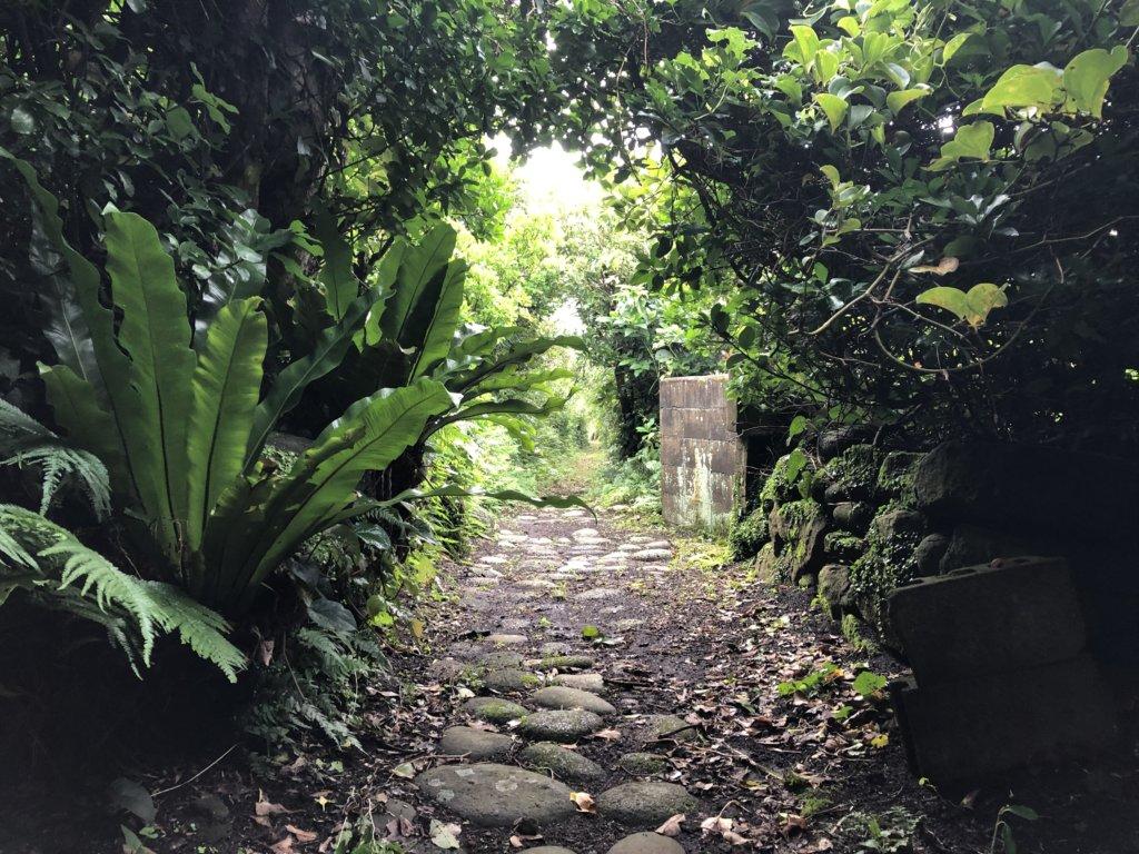 神社からの道