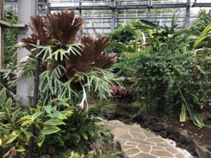 八丈植物公園温室内②