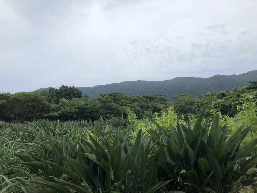 八丈島の植物