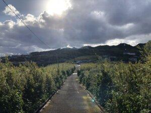 青ヶ島ヘリポートへの道